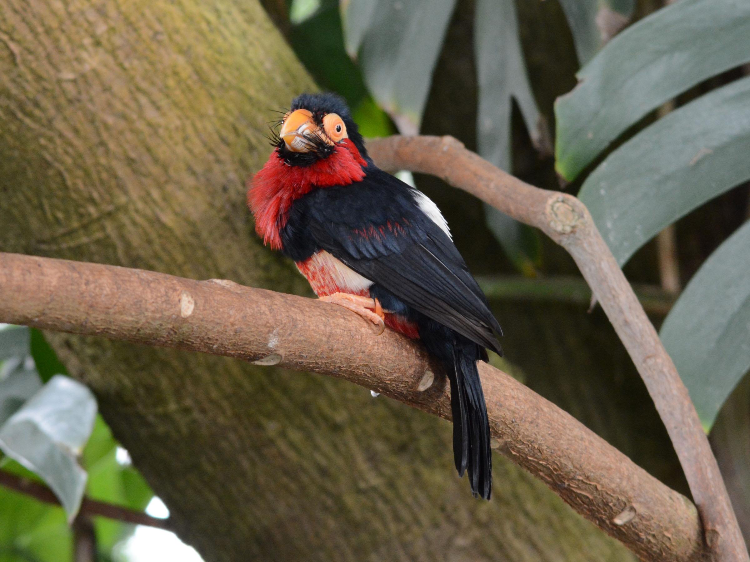 The Online Zoo - Moody Gardens Aquarium & Rainforest