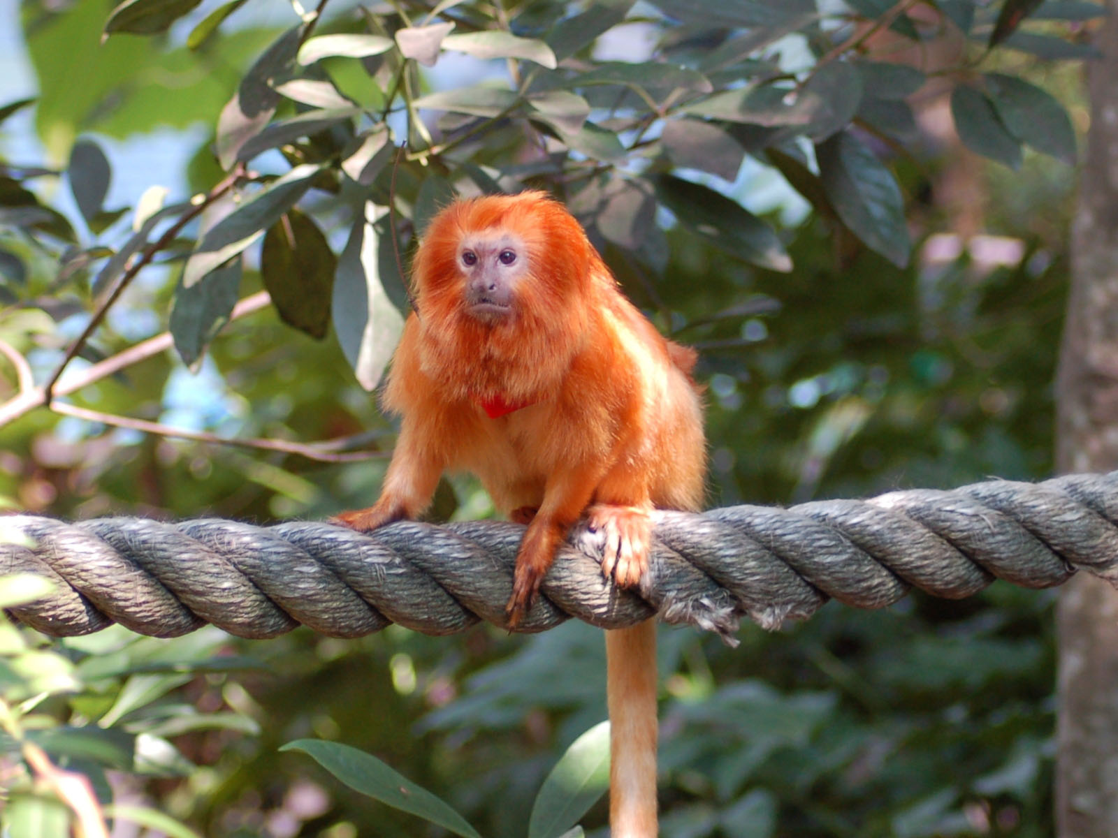 The Online Zoo South American Animals