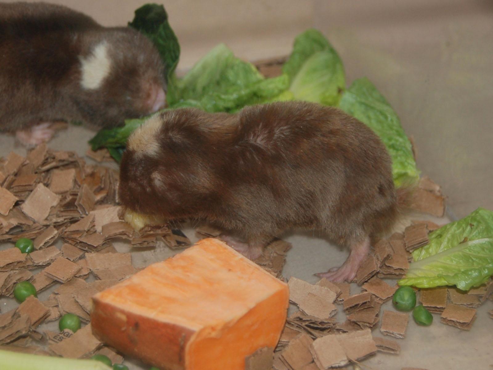 The Online Zoo Damaraland Mole Rat
