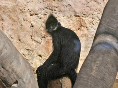 The Online Zoo Primates