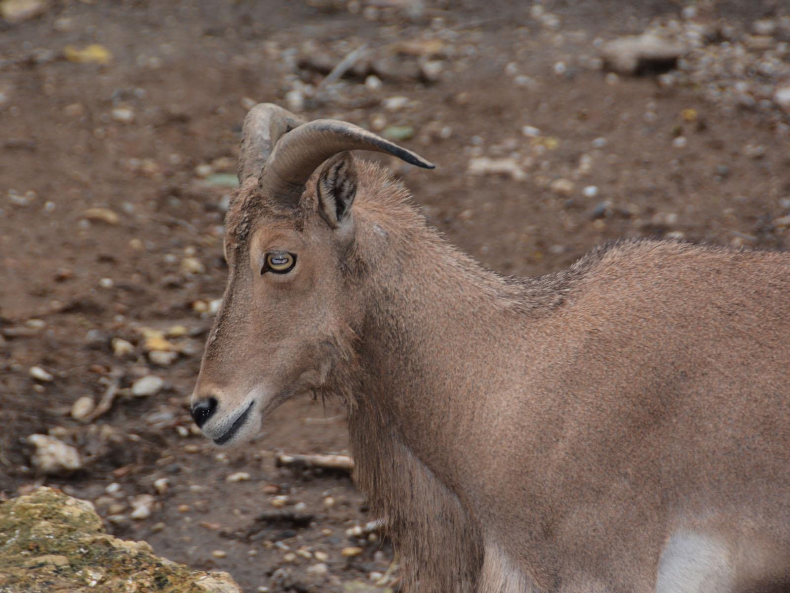 The Online Zoo - Frank Buck Zoo